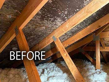 mold before remediation